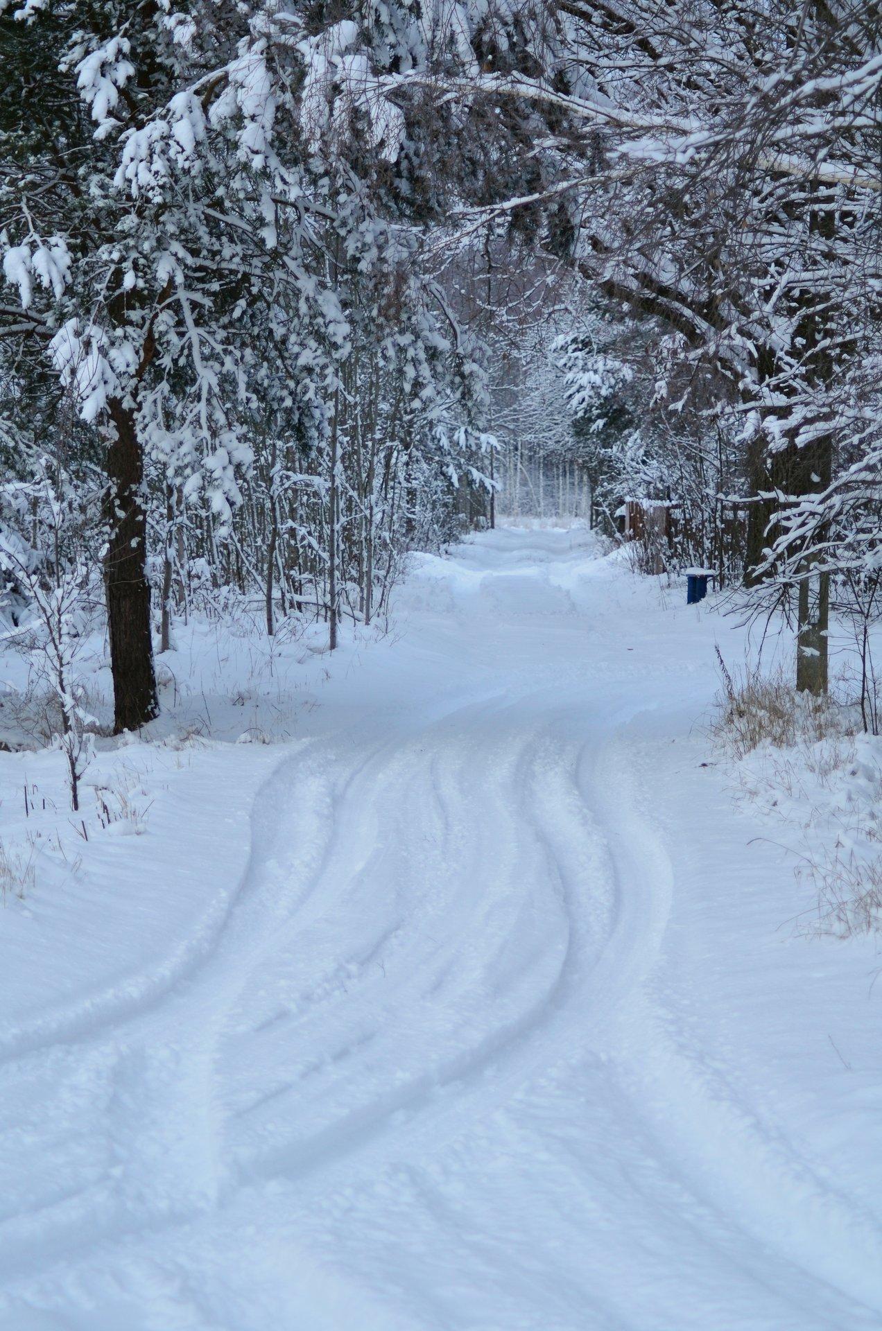 zima śnieg drzewa Puszcza Białowieska