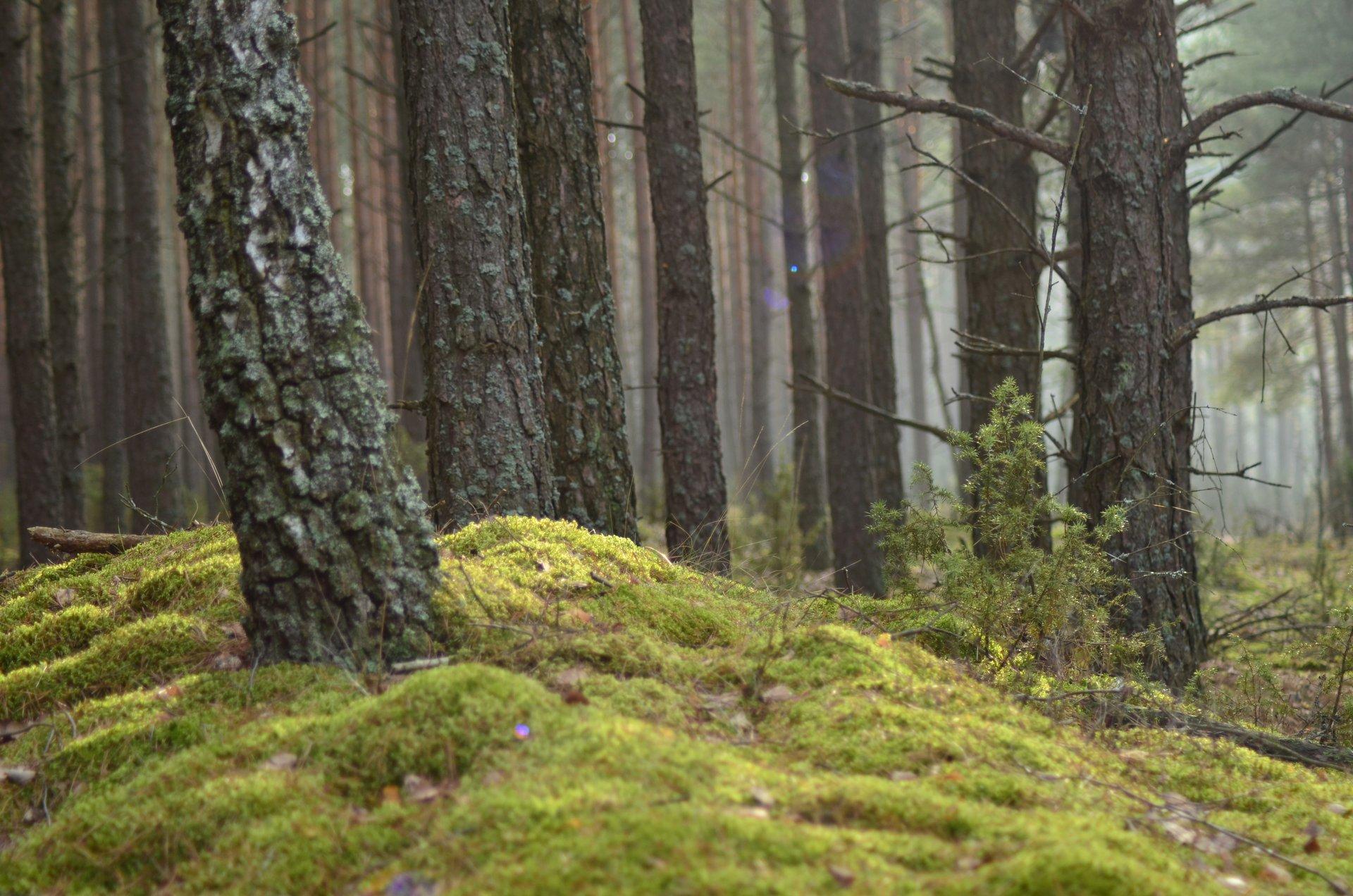 las Biebrzański Park Narodowyfree photo darmowe zdjęcie