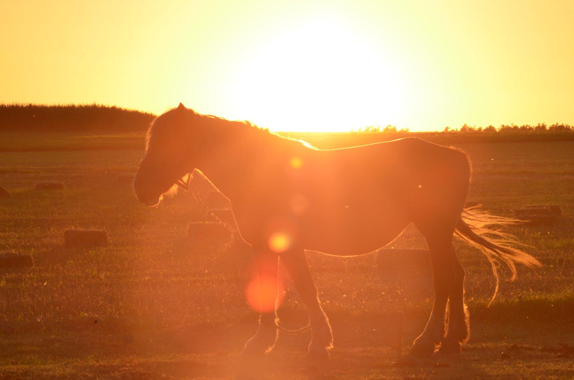 koń zwierzęta zachód słońcafree photo darmowe zdjęcie
