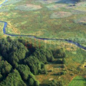 W Białymstoku będzie coraz goręcej, a Podlasie może stracić swoje lasy!