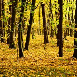Biwak na Podlasiu. Można legalnie bawić się w surwiwal w lesie!