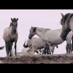 Dolina Górnej Narwi. Wyjątkowe miejsce, gdzie żyją półdzikie konie.