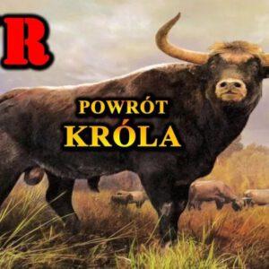 Tur to wymarły król Puszczy Białowieskiej. Czy możemy liczyć na jego powrót?