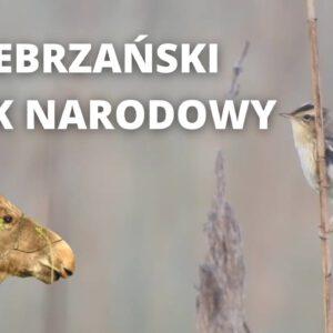 Piękno dzikiej przyrody pokazane na filmie. Tak się prezentuje Biebrzański Park Narodowy.