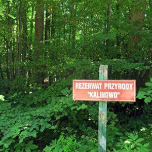 Rezerwat Kalinowo. Zobacz te wszystkie cuda przyrody na własne oczy!